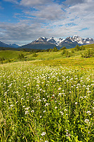 Scenic of the Kenai Mountains and wildflower meadows, Lost Lake Trail, Chugach National Forest, Kenai Peninsula, Alaska.