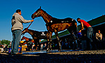 LOUISVILLE, KY - APRIL 30: All four Kentucky Derby hopefuls for trainer Todd Pletcher gets baths after exercising at Churchill Downs on April 30, 2018 in Louisville, Kentucky. Magnum Moon is in the foreground, followed by Noble Indy, Vino Rosso and Audible. (Photo by John Voorhees/Eclipse Sportswire/Getty Images)