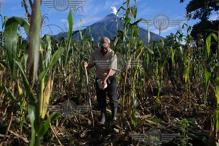 War survivor Roberto Gonzalez, 58, sows beans along his corn field in the 15 de Octubre La Trinidad community while the Fuego Volcano erupts in the background.