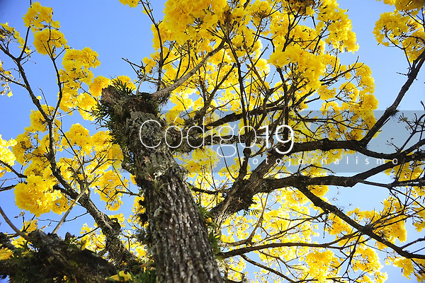 PORTO ALEGRE, RS, 21.09.2021 - DIA - ÁRVORE - Data marca a conscientização sobre a preservação das árvores e das florestas, incentivando a proteção do meio ambiente, em Porto Alegre, nesta terça-feira (21).