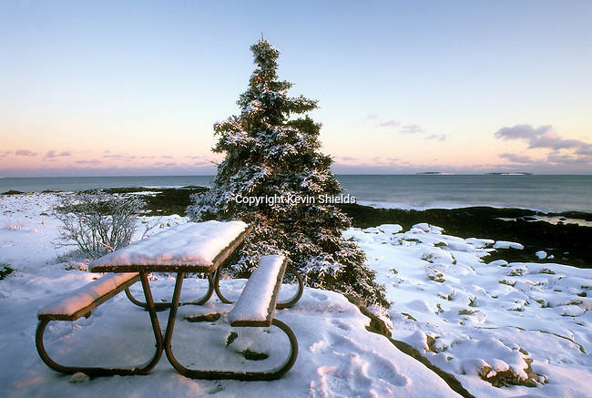 Snow-covered picnic table at Seawall Picnic Area in Acadia National Park, Maine, USA