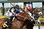 MARCH 27, 2021: #6 ANNEX and Jockey Junior Alvarado hustle their way clear of a triple dead heat to win the $100,000 Cutler Bay Stakes for Trainer Bill Mott on Florida Derby Day at Gulfstream Park in Hallandale Beach, Florida on March 27, 2021. Carson Dennis/Eclipse Sportswire/CSM