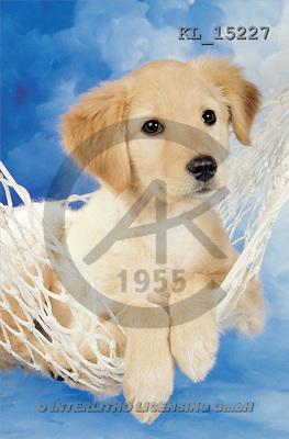 Interlitho, Alberto, ANIMALS, dogs, photos, dog, hammock(KL15227,#A#) Hunde, perros