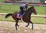 Shared Account, trained by Graham Motion and to be ridden by Edgar Prado , exercises in preparation for the 2011 Breeders' Cup at Churchill Downs on November 4, 2011.