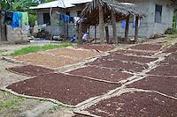 Mkokotoni, Zanzibar, Tanzania.  Cloves drying on mats.