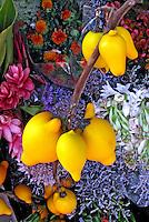 Flores. Juá, jurubeba-do-pará ( Solanum mammosum). SP. Foto de Manuel Lourenço.