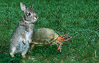 The match of which much was made-- the tortoise races the hare.