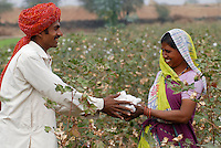 Asien Suedasien Indien Madhya Pradesh , bioRe Projekt fuer biodynamischen Anbau von Baumwolle in Kasrawad  -  mann und Frau bei Baumwollernte | .South asia India Madhya Pradesh , organic cotton project bioRe in Kasrawad - man and woman at cotton harvest