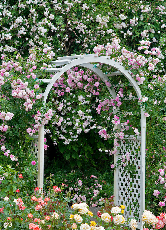 Arch with climbing roses. Heirloom Gardens. St. Paul, Oregon