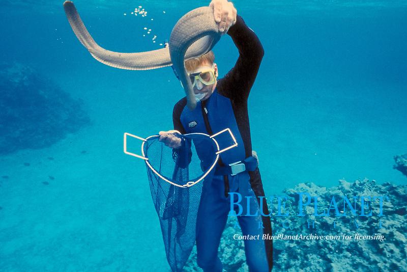 Dr. Glen Burns captures an olive sea snake, sea krait, Aipysurus laevis, to milk for its venom, Australia