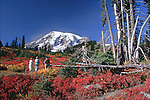Photographers gaze at Mt. Rainier from Paradise Meadows in fall colors near visitor center at Paradise, Mt. Rainier National Park.