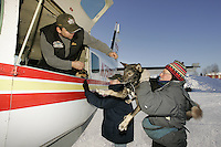 "Volunteers help ""Caravan Joe"" load dropped dogs onto the Penair Caravan on Wednesday morning at the Nikolai checkpoint.  2005 Iditarod Trail Sled Dog Race."
