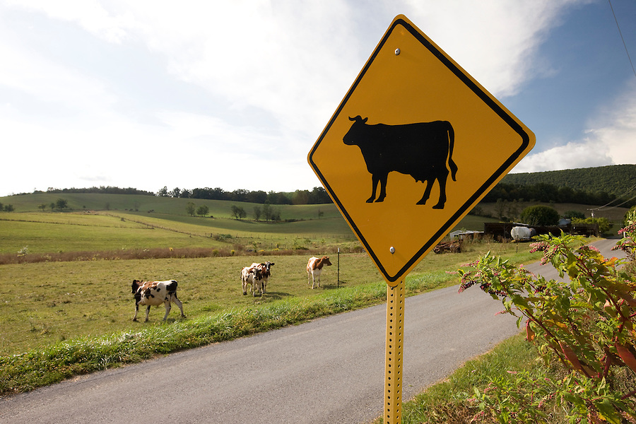 Farms and rural roads in Nelson County, Virginia. Photo/Andrew Shurtleff