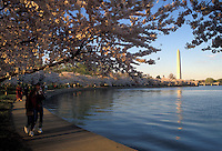 AJ2577, Washington Monument, Washington, DC, District of Columbia, capital city, Cherry trees in bloom surround the Tidal Basin with the Washington Monument in the background in the spring in Washington, D.C.