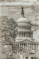 US Capitol Washington DC Magnolia Tree in the Spring Black and White Photography Washington DC Art - - Framed Prints - Wall Murals - Metal Prints - Aluminum Prints - Canvas Prints - Fine Art Prints Washington DC Landmarks Monuments Architecture