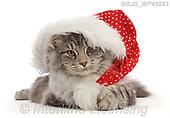 Kim, CHRISTMAS ANIMALS, WEIHNACHTEN TIERE, NAVIDAD ANIMALES, photos+++++,GBJBWP45583,#xa#