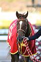 Horse Racing: Asahi Hai Futurity Stakes