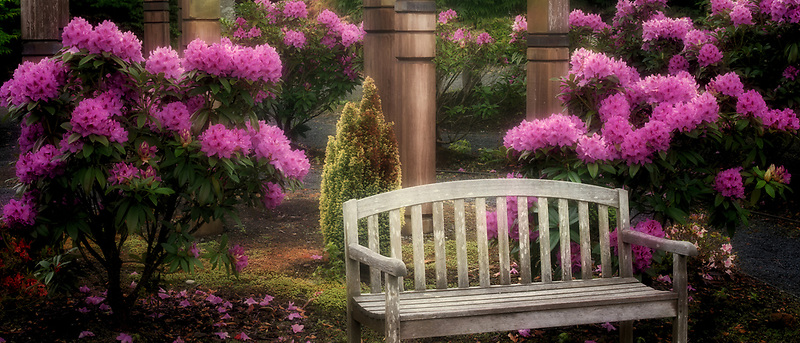 Rhododendrons and bench. The Oregon Garden. Silverton, Oregon