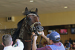 September 07, 2015. Neck 'n Neck in the paddock before the Greenwood Cup. Neck 'n Neck, Paco Lopez up, wins the Grade III Greenwood Cup Stakes, one and 1/2 miles, for three years olds and upward, at  Parx Racing in Bensalem, PA. Ian Wilkes trainer; Ted Mitziaff, owner. (Joan Fairman Kanes/ESW/CSM)