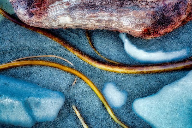 Seaweed Kelp patterns on beach. Crook Point, Oregon
