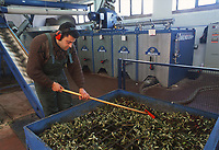 - frantoio automatico per la spremitura delle olive e la produzione dell'olio<br /> <br /> - automatic crusher for the squeeze of the olives and the production of the oil