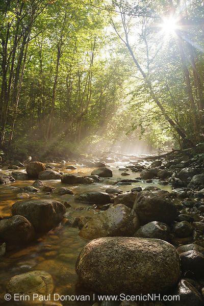 Morning fog along Cedar Brook during the summer months in the Pemigewasset Wilderness of Lincoln, New Hampshire USA. This area was part of the East Branch & Lincoln Railroad, which was a logging railroad in operation from 1893-1948.