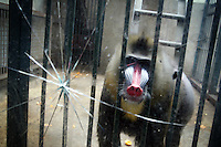 Zoos in China