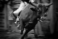Black & white image of a rodeo - Bull runs to shake rider. United States Rodeo.