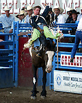 Greeley, Colorado cowboy Royce Ford scored an 85 point bareback ride on the Beutler & Son Rodeo Company bronc No Date Kate in front of his hometown fans at the July 29th performance of the Greeley Independence Stampede in Greeley, Colorado.