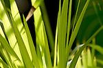Europa, DEU, Deutschland, Nordrhein Westfalen, NRW, Ruhrgebiet, Bochum, Ruhr-Uni, Botanischer Garten, Pflanzen, Nahaufnahme, Kategorien und Themen, Natur, Umwelt, Pflanzen, Pflanzenkunde, Botanik, Biologie, <br /> <br /> [Fuer die Nutzung gelten die jeweils gueltigen Allgemeinen Liefer-und Geschaeftsbedingungen. Nutzung nur gegen Verwendungsmeldung und Nachweis. Download der AGB unter http://www.image-box.com oder werden auf Anfrage zugesendet. Freigabe ist vorher erforderlich. Jede Nutzung des Fotos ist honorarpflichtig gemaess derzeit gueltiger MFM Liste - Kontakt, Uwe Schmid-Fotografie, Duisburg, Tel. (+49).2065.677997, <br /> archiv@image-box.com, www.image-box.com]