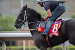 DEC 12,2015: Lucia Valentina ,trained by Kris Lees,exercises in preparation for the Hong Kong Cup at Sha Tin in New Territories,Hong Kong. Kazushi Ishida/ESW/CSM