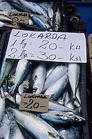 Europe/Croatie/Dalmatie/Split: Pêche du jour sur le marché- Maquereaux