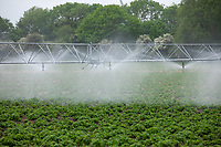 Boom irrigation on potatoes - Lincolnshire, June