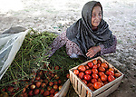 8 June 2013, Mazar-i-Sharif, Balkh Province, Afghanistan. Local woman Khanum Gul packs up her tomatos at her small plot - or kitchen garden - on her family property in Mazar-i-Sharif.  She is cultivating eggplants , corn, radish and tomato. Khanum is a beneficiary of the new National Horticulture and Livestock Project (NHLP) that is providing seedlings , fertiliser and technical help to beneficiaries.  The NHLP is providing training and equipment to farmers to assist in increasing production and to improve management of lands and animals. Picture by Graham Crouch/World Bank