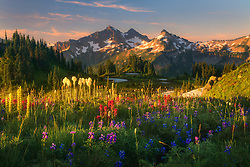 Beautiful soft light on wildflower laden meadows looking towards the Tatoosh Range, Mt. Rainier National Park.<br /> Artist Edition: 15/200 Limited