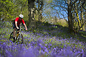05/05/16 <br /> <br /> A cyclist makes the most of the spring sunshine, winding his way through a blanket of brilliant bluebells as he pedals through Bow Wood, near Matlock in the Derbyshire Peak District, with weather for the weekend forecast to be hotter than Ibiza.<br /> <br /> <br /> All Rights Reserved: F Stop Press Ltd. +44(0)1335 418365   +44 (0)7765 242650 www.fstoppress.com