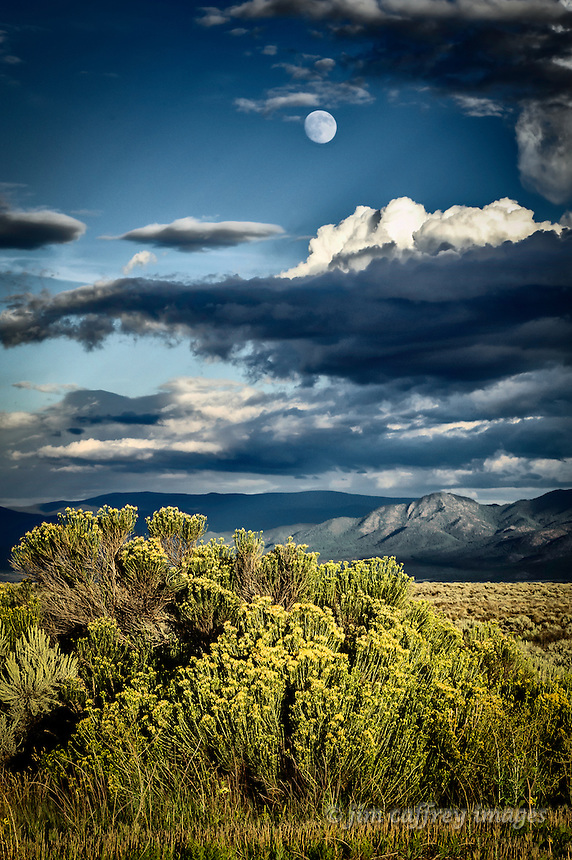 Chamisa in bloom on the Taos Plateau with the Sangre de Cristo Mountains in the distance under a nearly full moon