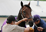 LEXINGTON, KY - APRIL 23: Nyquist getting a bath after working in preparation for the Kentucky Derby on May 7th at Churchill Downs in Louisville, KY.  April 23, 2016 in Lexington, Kentucky. (Photo by Candice Chavez/Eclipse Sportswire/Getty Images)