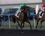 Lines of Battle wins the UAE Derby on March 30th, 2013 at Meydan Racecourse (( Special transmission of horses in the Top 25 for points for the 2013 KentuckyDerby ))