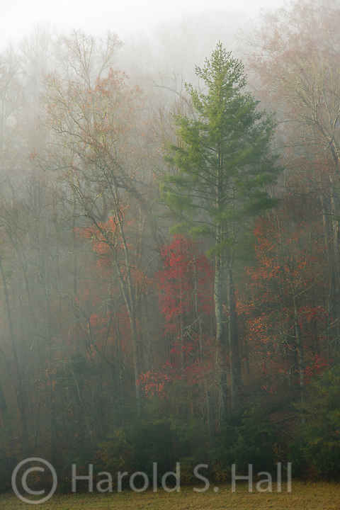 Fog in Cades Cove of the Great Smoky Mountains of Tennessee mutes the bright fall colors.