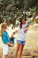 Teenage girls picking apples. Alpine, Oregon.