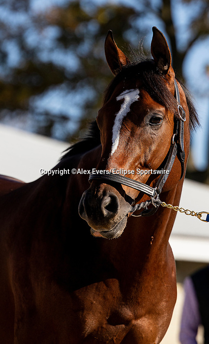 November 4, 2020: Maximum Security, trained by trainer Bob Baffert, exercises in preparation for the Breeders' Cup Classic at Keeneland Racetrack in Lexington, Kentucky on November 4, 2020. Alex Evers/Eclipse Sportswire/Breeders Cup