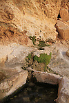 Ein Netafim in Eilat Mountains