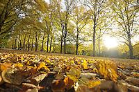 Herbst in Leipzig - hier rund um die Sachsenbrücke am Clara-Zetkin-Park . Foto: Norman Rembarz