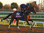 Thoughtfully, trained by trainer Steven M. Asmussen, exercises in preparation for the Breeders' Cup Juvenile Fillies at Keeneland Racetrack in Lexington, Kentucky on November 4, 2020.