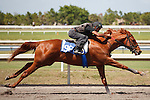 #96Fasig-Tipton Florida Sale,Under Tack Show. Palm Meadows Florida 03-23-2012