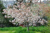 Special Plants, Derry Watkins - April