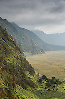 Vegetation and cliffs on Mount Bromo Crater, Mt Bromo, Tengger massif, East Java, Indonesia, Southeast Asia