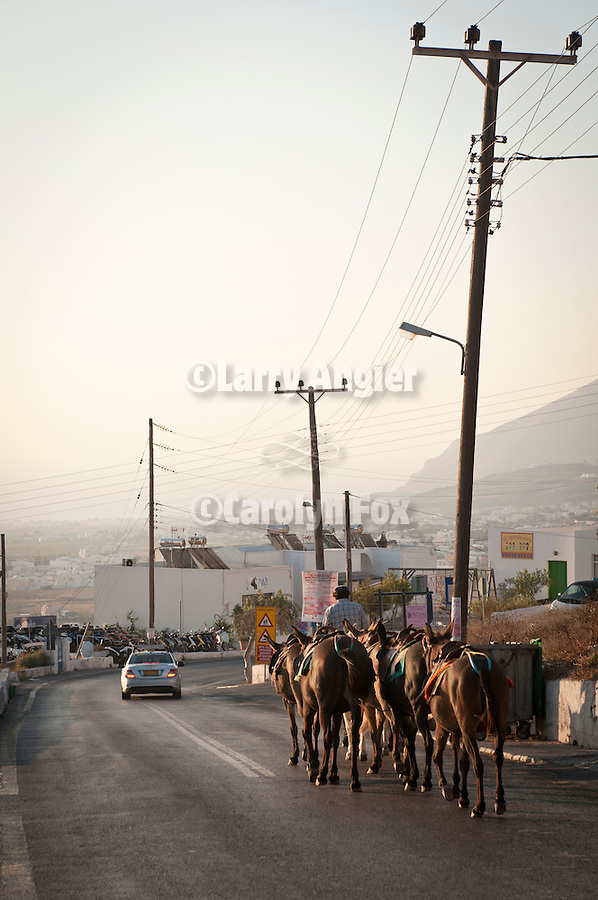 Donkeys in a convoy on the way to work, Fira, Santorini, Greece.