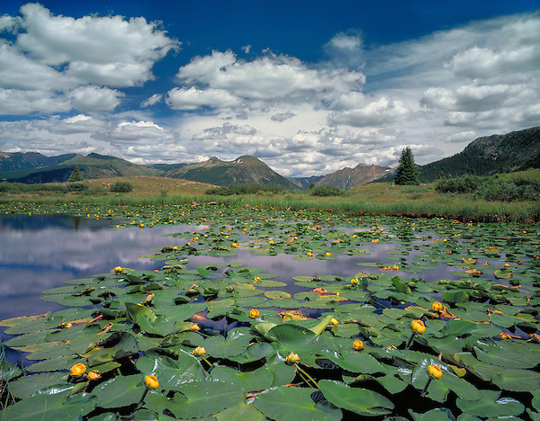 Lillies on an alpine lake, Weminuche Wilderness, Molas Pass, Silverton, Colorado John guides custom photo tours in the Sneffels Range and throughout Colorado. .  John leads private photo tours throughout Colorado. Year-round Colorado photo tours.